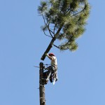 Forest Scapes LLC, Technical Tree Removal