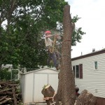 Forest Scapes LLC; Tree Removal