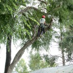 Forest Scapes LLC, Tree Trimming